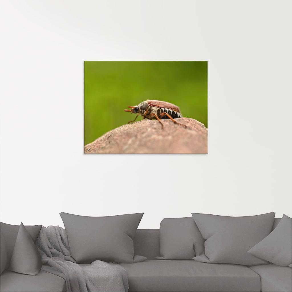 Artland Glasbild »Maikäfer«, Insekten, (1 St.)