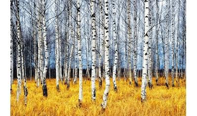 Papermoon Fototapete »Autumn Birch Grove« kaufen