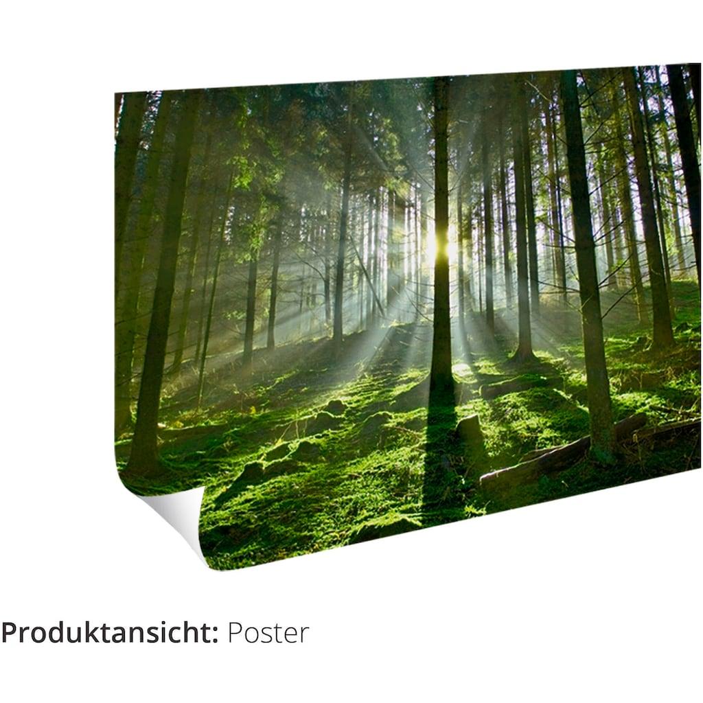 Artland Wandbild »Weidengebüsch bei tiefstehender Sonne.«, Sonnenaufgang & -untergang, (1 St.), in vielen Größen & Produktarten -Leinwandbild, Poster, Wandaufkleber / Wandtattoo auch für Badezimmer geeignet