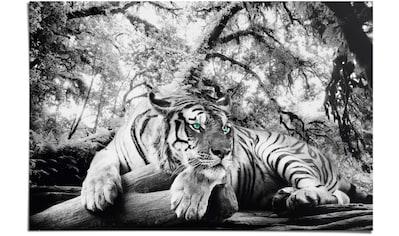 Reinders! Poster »Tigerblick«, (1 St.) kaufen