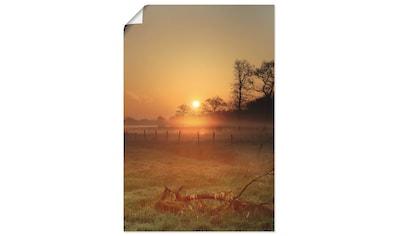 Artland Wandbild »Sonnenaufgang und Morgentau«, Sonnenaufgang & -untergang, (1 St.),... kaufen