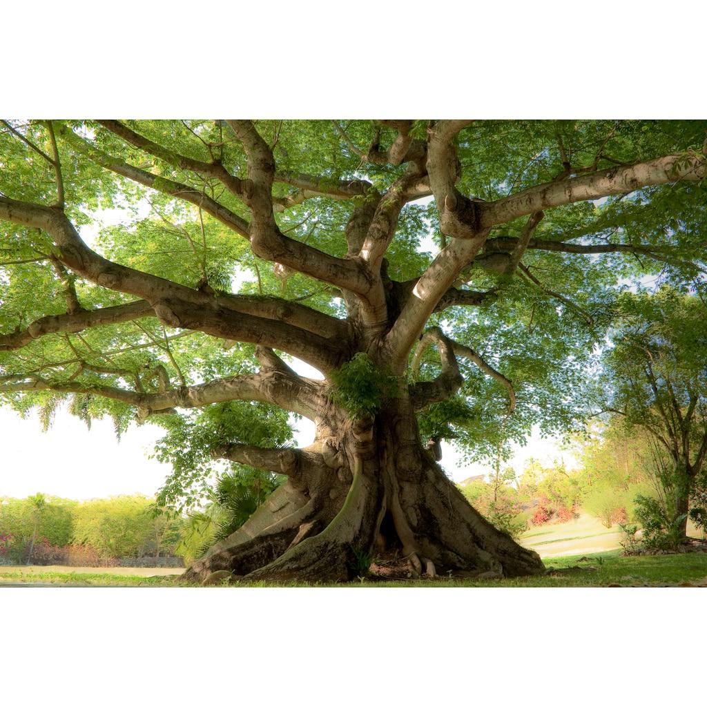 Papermoon Fototapete »Peaceful Tree«