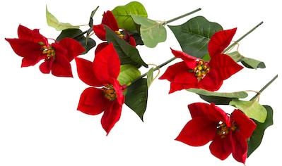 Botanic-Haus Kunstblume »Edel-Poinsettienpick« kaufen