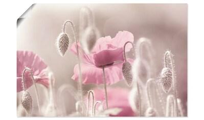 Artland Wandbild »Rosa Mohnblumen Zeit«, Blumen, (1 St.), in vielen Größen & Produktarten - Alubild / Outdoorbild für den Außenbereich, Leinwandbild, Poster, Wandaufkleber / Wandtattoo auch für Badezimmer geeignet kaufen
