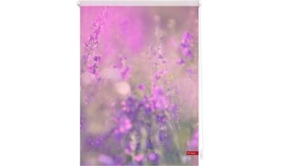 LICHTBLICK Seitenzugrollo »Klemmfix Motiv Blumenwiese«, Lichtschutz, ohne Bohren, freihängend, bedruckt kaufen