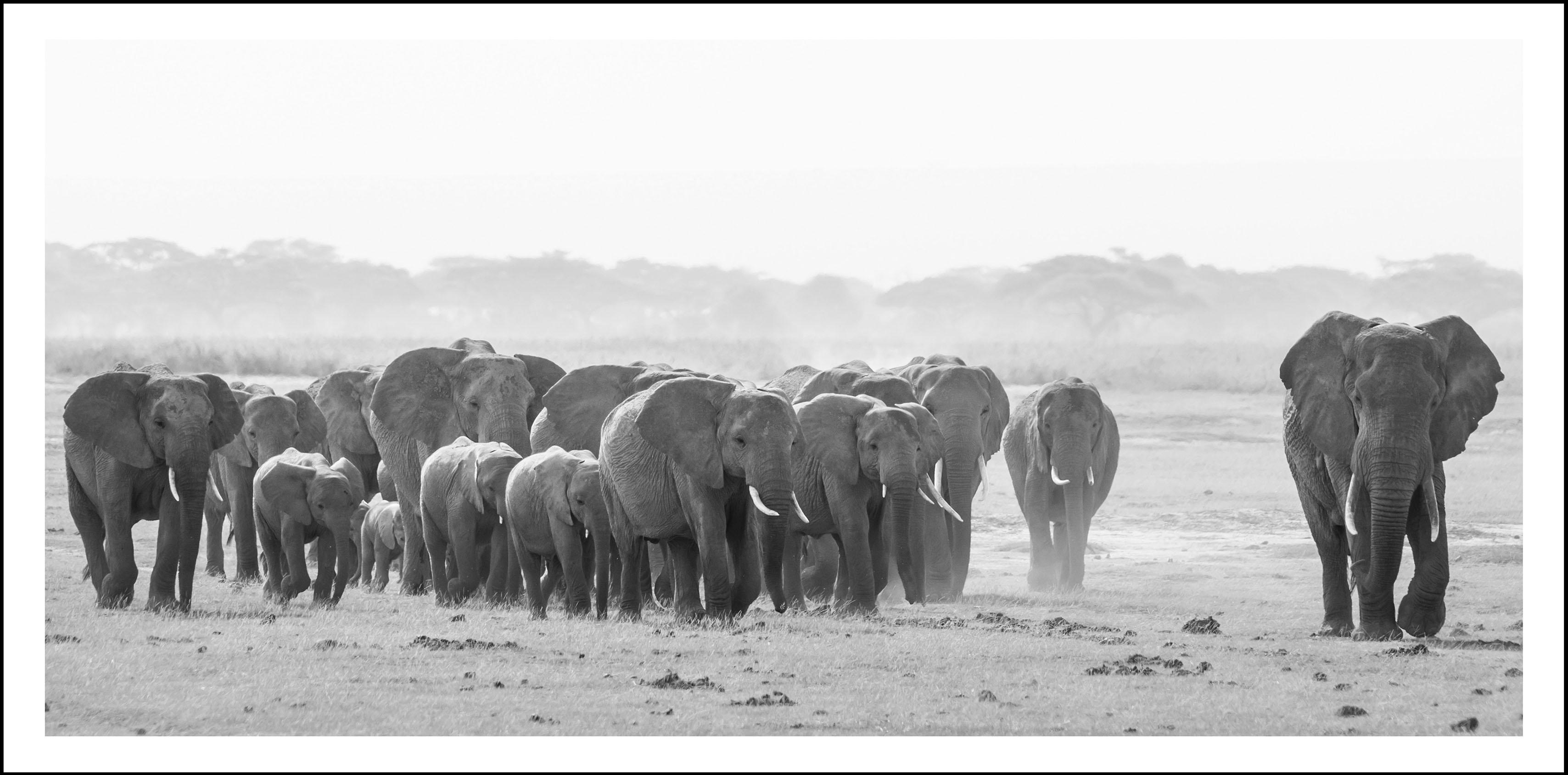 Bild Elefanten, grau