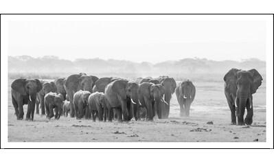 Spiegelprofi GmbH Bild »Elefanten«, mit Rahmen kaufen