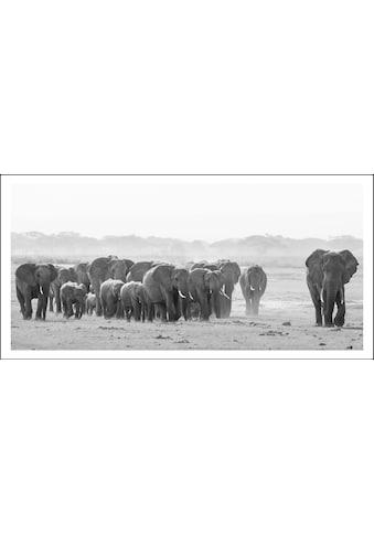 Bild »Elefanten« kaufen