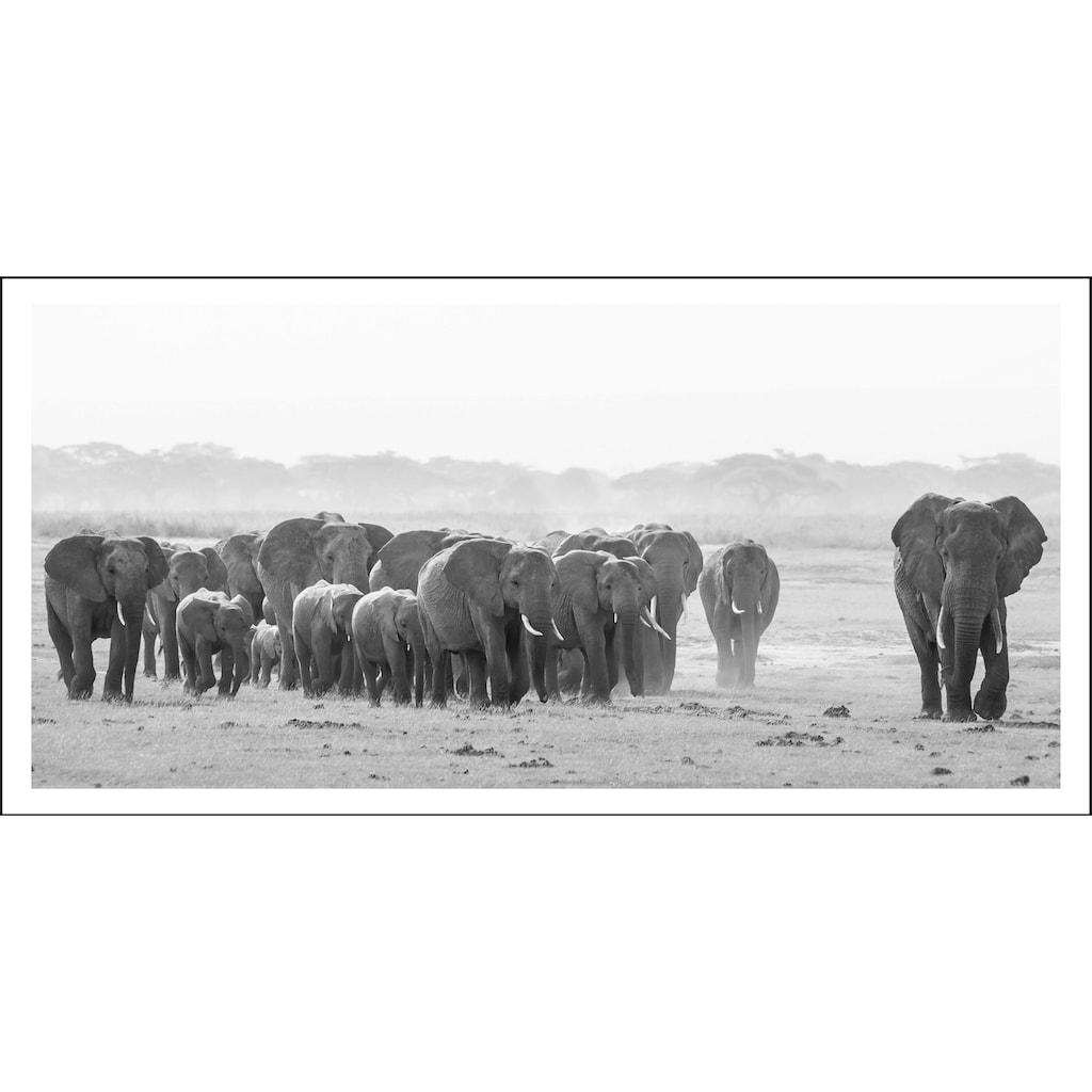 Spiegelprofi GmbH Bild »Elefanten«, mit Rahmen
