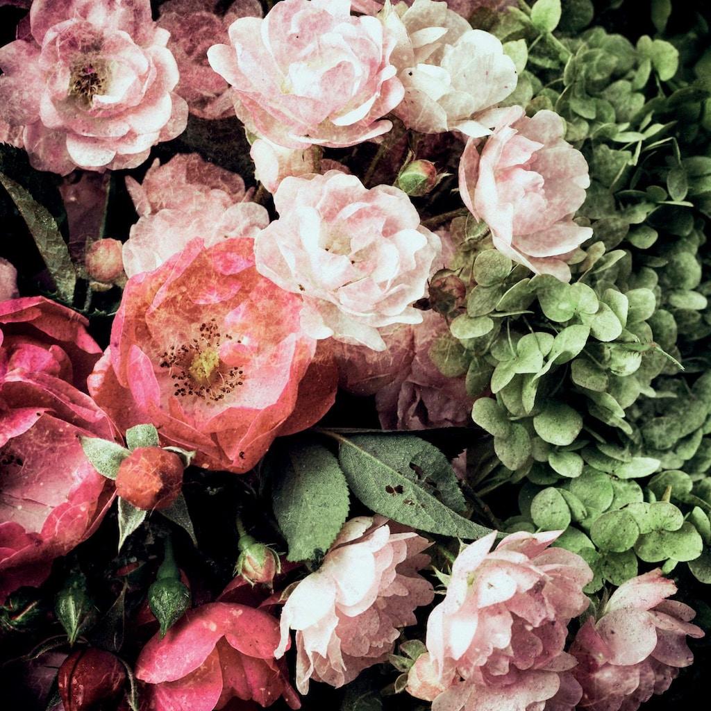 queence Kissenhülle »Blüten«, (1 St.)