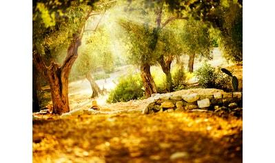 PAPERMOON Fototapete »Olive Trees«, Vlies, in verschiedenen Größen kaufen