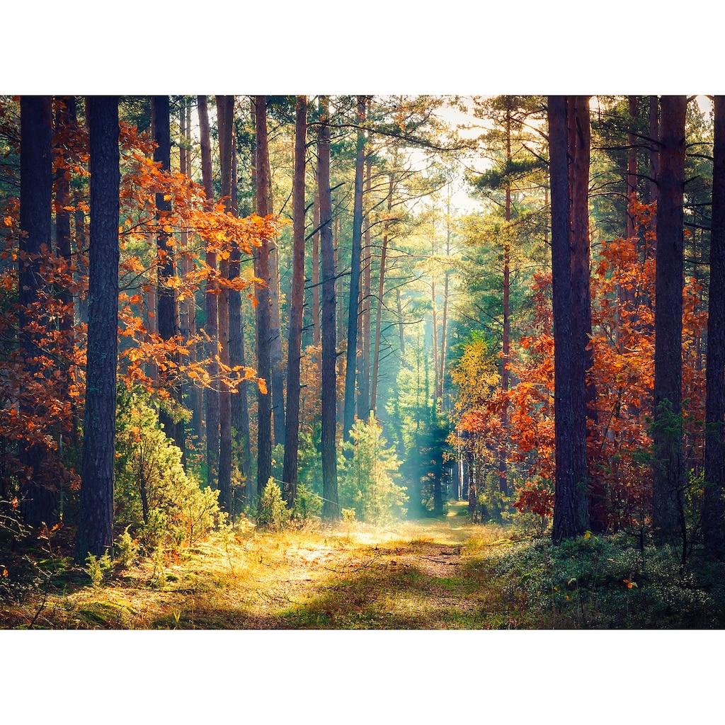 Papermoon Fototapete »Autumn Forest Sun Rays«