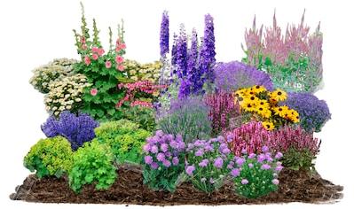 BCM Beetpflanze »Cottage Garden«, (Set), 21 Pflanzen kaufen