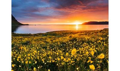 Papermoon Fototapete »Flower Field Kirkjufell Iceland« kaufen
