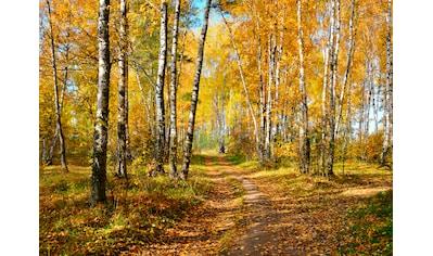 PAPERMOON Fototapete »Autumn Forest«, Vlies, in verschiedenen Größen kaufen