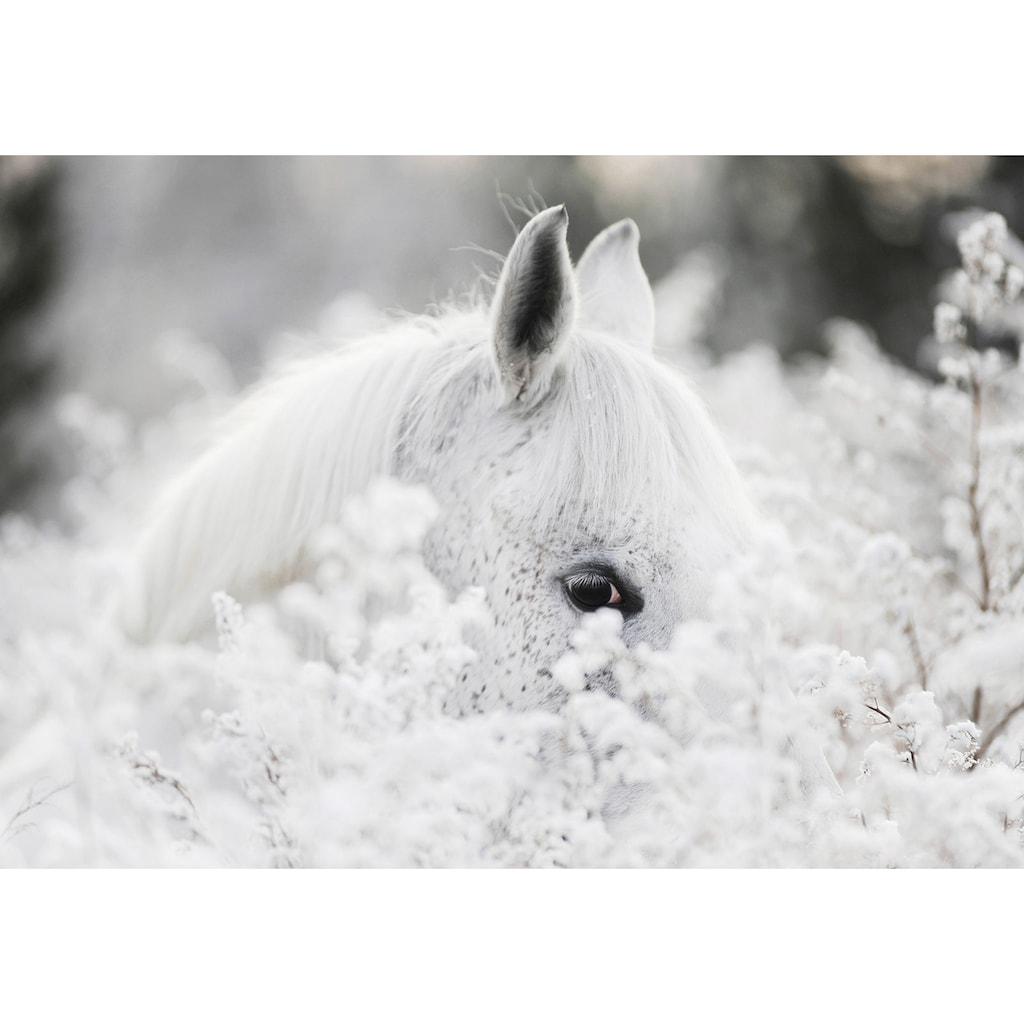 Consalnet Vliestapete »Weißes Pferd im Schnee«, Motiv