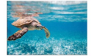 Wall-Art Acrylglasbild »Schildkröte auf Reisen« kaufen