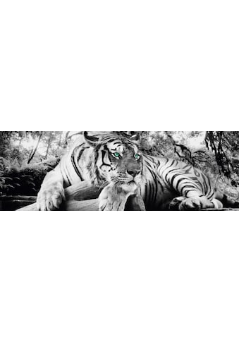 Home affaire Deco-Panel »Tiger guckt dich an« kaufen
