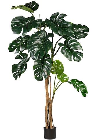 Creativ green Kunstpflanze »Splitphilodendron« kaufen