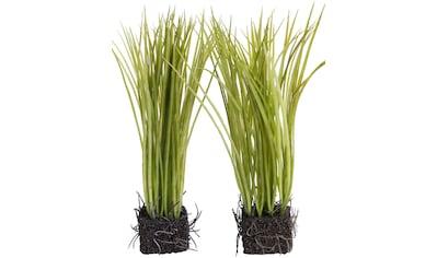 Botanic-Haus Kunstgras »Grasarrangement« kaufen