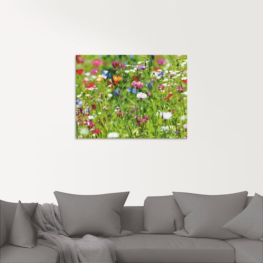 Artland Glasbild »Blumenwiese I«, Blumenwiese, (1 St.)