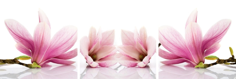 Home affaire Kunstdruck »Magnolia« | Dekoration > Bilder und Rahmen > Poster | Weiß | HOME AFFAIRE