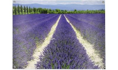 Art for the home Poster »Lavendel«, (1 St.), Poster, Wandbild, Bild, Wandposter kaufen