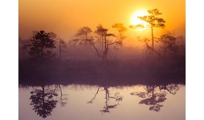 PAPERMOON Fototapete »Misty Morning Scenery«, Vlies, in verschiedenen Größen kaufen