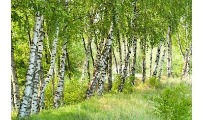 PAPERMOON Fototapete »Birch Tree Forest«, Vlies, in verschiedenen Größen kaufen