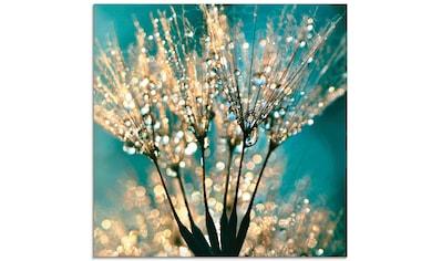 Artland Glasbild »Pusteblume Schirmchen abstrakt«, Blumen, (1 St.) kaufen