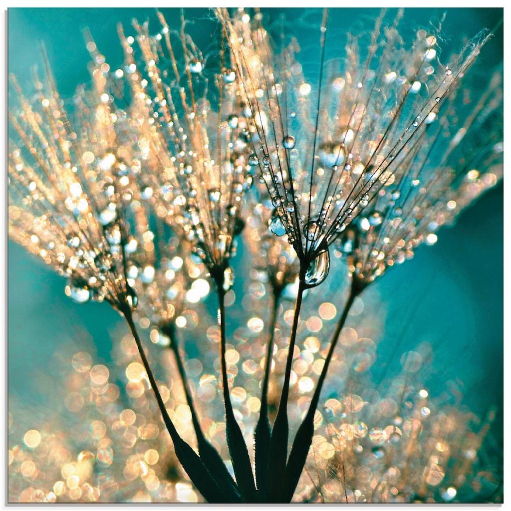 Artland Glasbild »Pusteblume Schirmchen abstrakt«, Blumen, (1 St.)