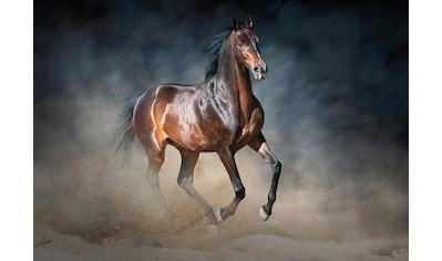 Consalnet Vliestapete »Galoppierendes Pferd«, Motiv kaufen