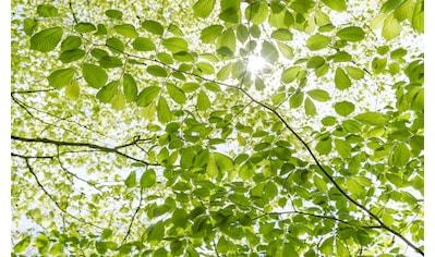 Komar Fototapete »Im Frühlingswald«, mehrfarbig-natürlich-bedruckt kaufen