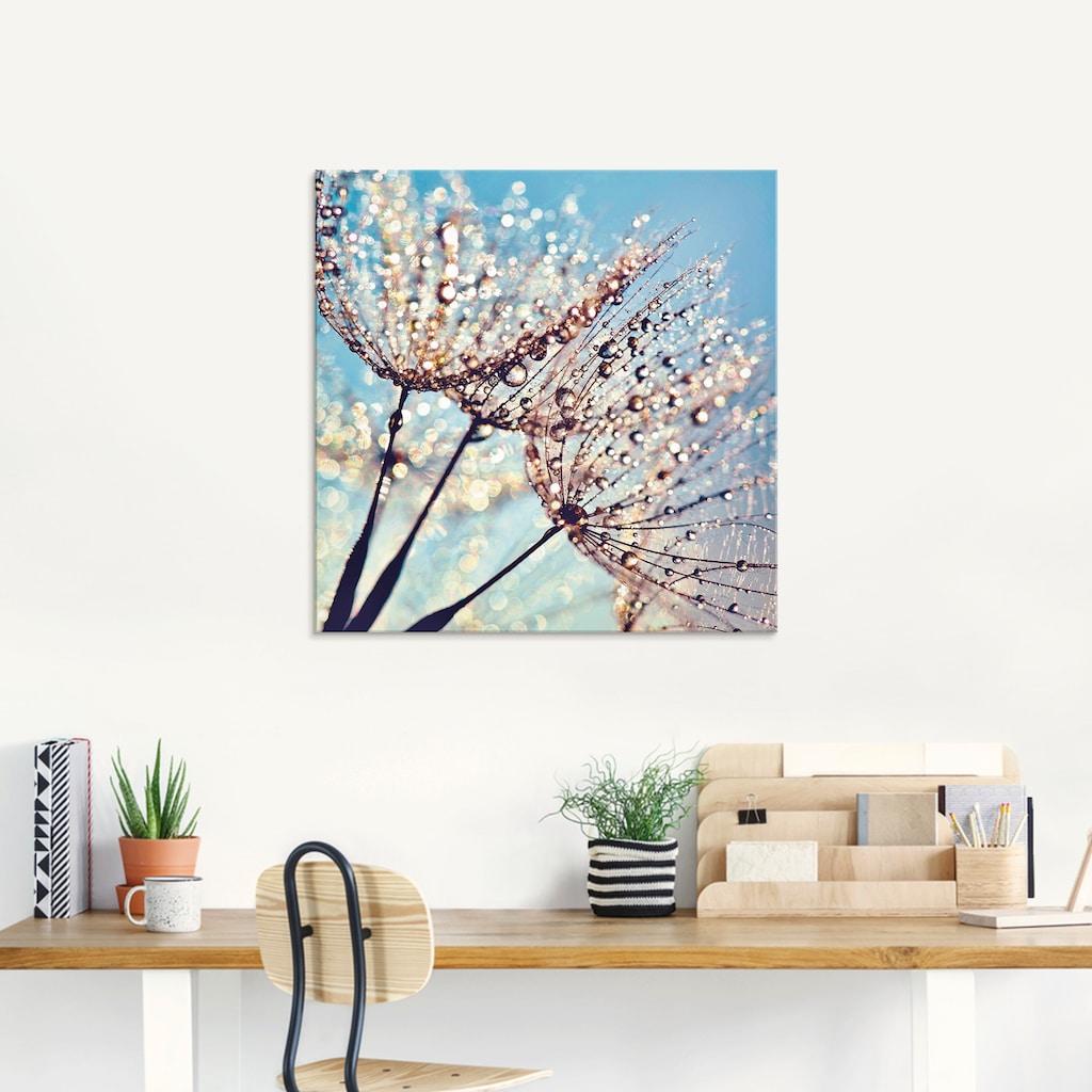 Artland Glasbild »Pusteblume Tröpfchenfänger«, Blumen, (1 St.)