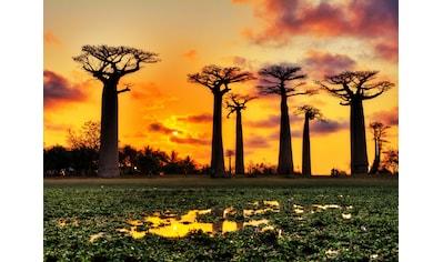 Papermoon Fototapete »Baobabs Trees African Sunset« kaufen