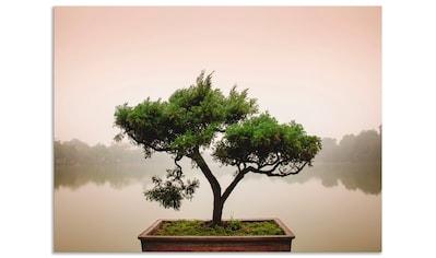 Artland Wandbild »Chinesischer Bonsaibaum«, Bäume, (1 St.), in vielen Größen & Produktarten - Alubild / Outdoorbild für den Außenbereich, Leinwandbild, Poster, Wandaufkleber / Wandtattoo auch für Badezimmer geeignet kaufen