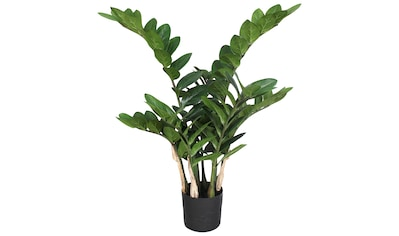 Creativ green Kunstpflanze »Zamifolia« (1 Stück) kaufen