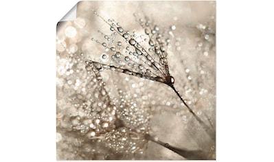 Artland Wandbild »Pusteblume Tautropfen« kaufen