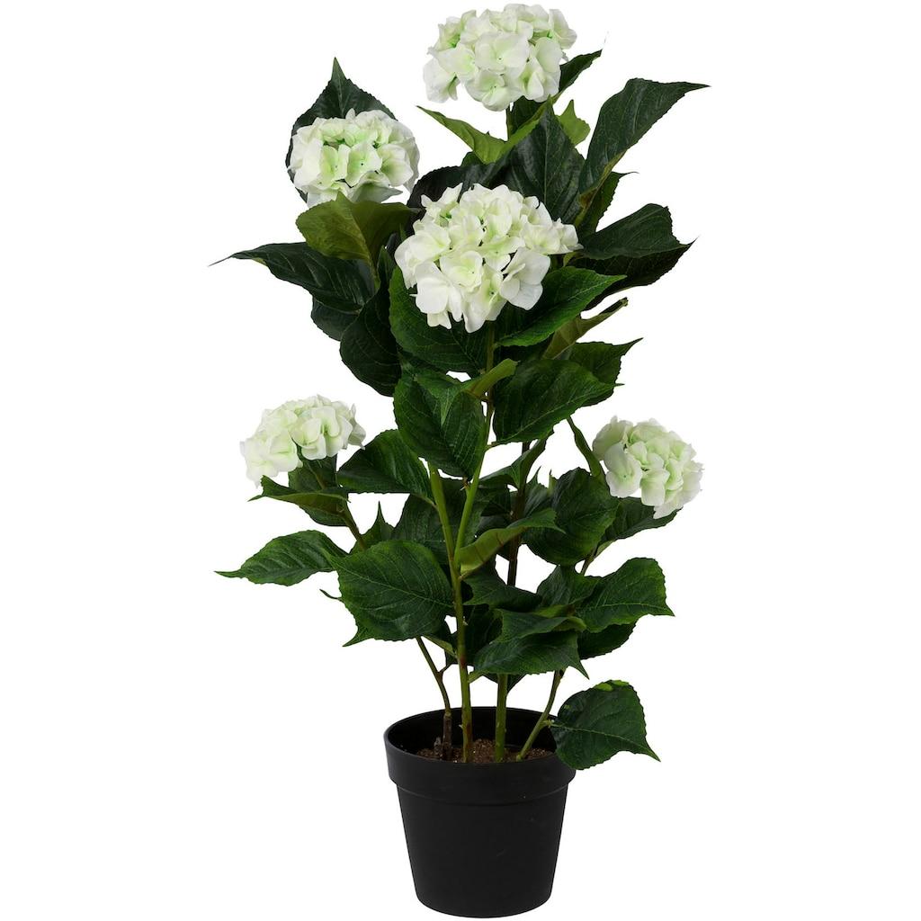 Creativ green Kunstpflanze »Hortensie«, im Kunststofftopf