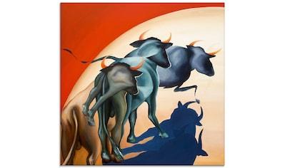 Artland Glasbild »Stiere«, Wildtiere, (1 St.) kaufen