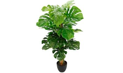 I.GE.A. Kunstpflanze »Splitphilopflanze«, im Kunststofftopf kaufen