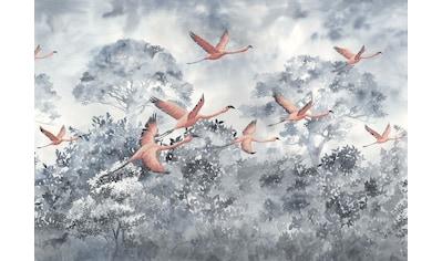 Komar Fototapete »Vliestapete Flamingos in the Sky«,... kaufen