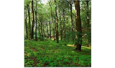 Artland Glasbild »Panorama von einem grünen Sommerwald«, Wald, (1 St.) kaufen
