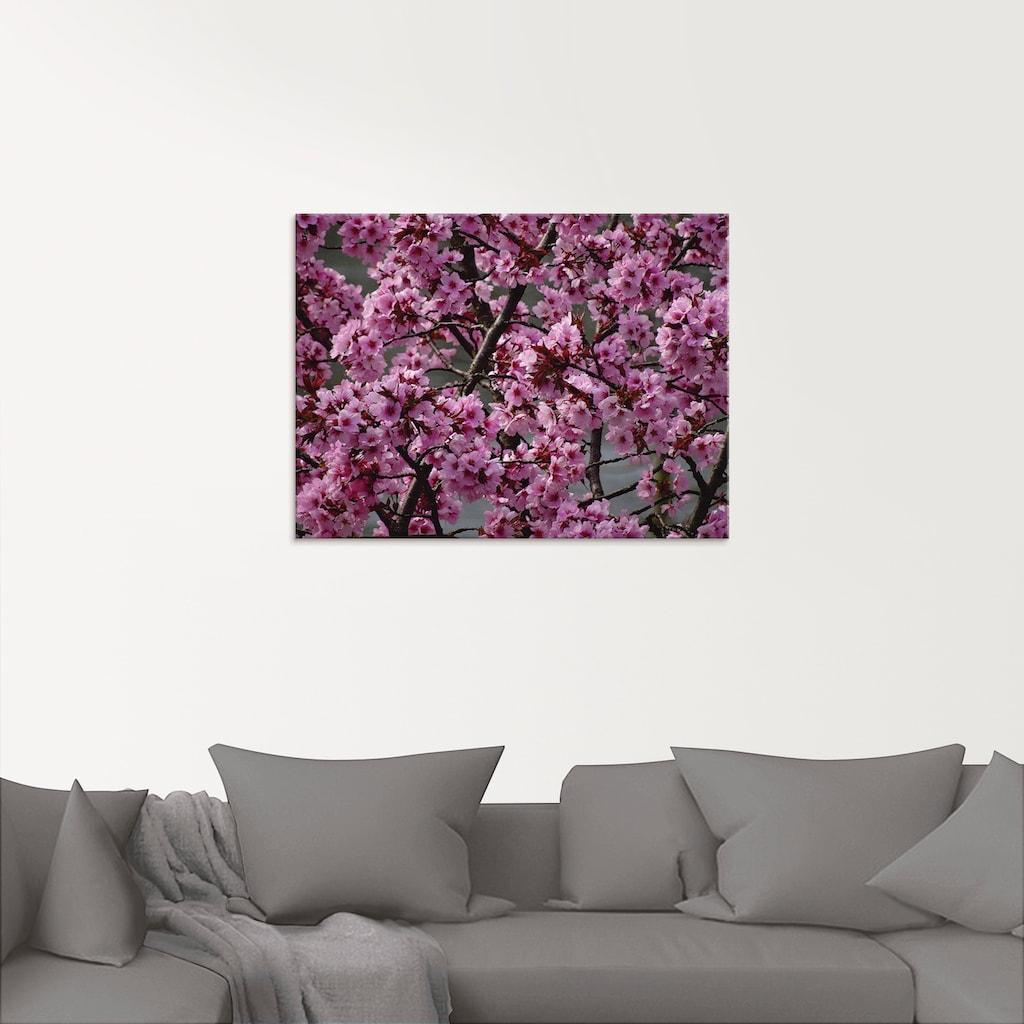Artland Glasbild »Japanische Zierkirschen Blüte«, Bäume, (1 St.)