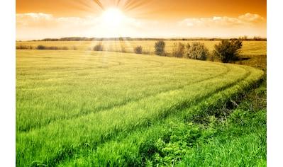 Papermoon Fototapete »Field of Fresh Grain« kaufen
