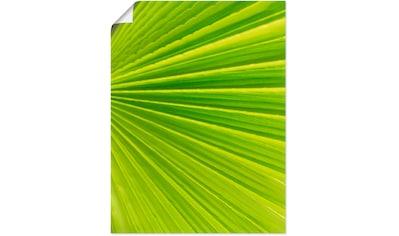 Artland Wandbild »Palmenblätter«, Blätter, (1 St.), in vielen Größen & Produktarten -... kaufen