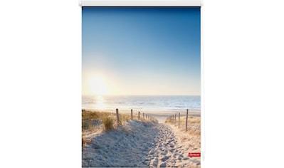 LICHTBLICK Seitenzugrollo »Klemmfix Motiv Ostseestrand«, Lichtschutz, ohne Bohren, freihängend, bedruckt kaufen