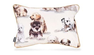 H.O.C.K. Dekokissen »Bisu«, mit kleinen Hunden kaufen