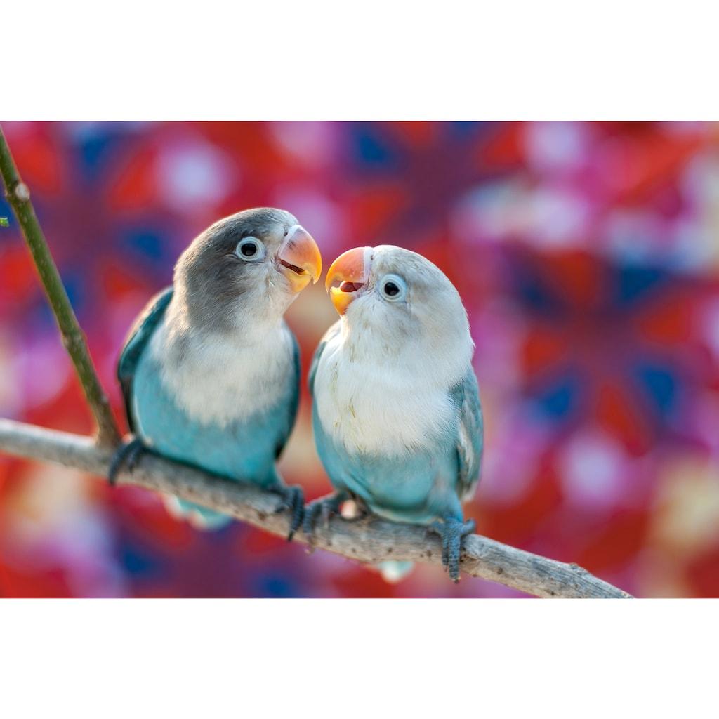Papermoon Fototapete »Love Birds«