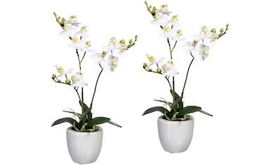 Creativ green Kunstorchidee »Phalaenopsis«, im Keramiktopf, 2er Set kaufen